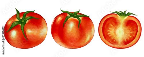 水彩風のトマトのイラストと 断面のイラスト Buy This Stock Vector And Explore Similar Vectors At Adobe Stock Adobe Stock