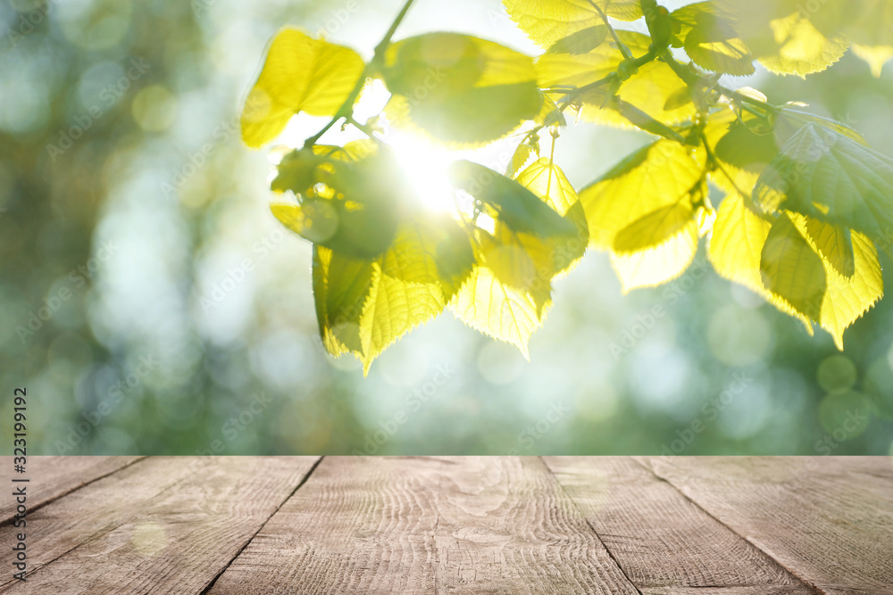 Fototapeta Wooden table and tree branch with green leaves on sunny day. Springtime