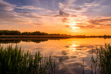Scenic View Of Beautiful Sunset Or Sunrise Above The Pond Or Lake At Spring Or Early Summer Evening With Cloudy Sky Background And Reed Grass At Foreground. Landscape. Water Reflection.