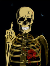 The Human Skeleton Shows The M...