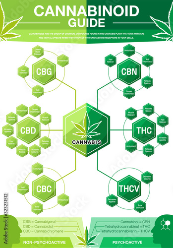 Photo Cannabinoid Guide infographic chart