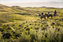 Cowboys On Horseback Herding Cattle In Pieceful Prairie Setting. Cody, Wyoming, USA