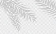 Transparent shadow effects. Vector with shadow overlays on transparent background. Vector of transparent shadows of palm leaf, Leaves