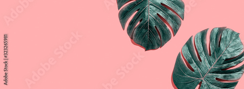 Obraz na plátně Tropical plant Monstera leaves overhead view flat lay