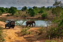 Elephant Walking Past A Safari Jeep In Udewalawe National Park