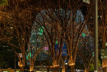 People Are Traveling The Jozenji Of Sendai For New Year Light Up Celebration.