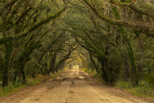 Long Wet Road Tree Covered