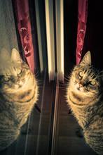 Reflet Du Chat Dans La Baie Vitrée