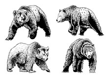 Graphical Set Of Grizzly Bears Isolated On White,vector Illustration