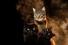 Portrait Of Three Cats On A Bl...
