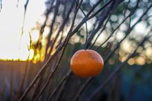 Pakistani Orange Beautifully C...