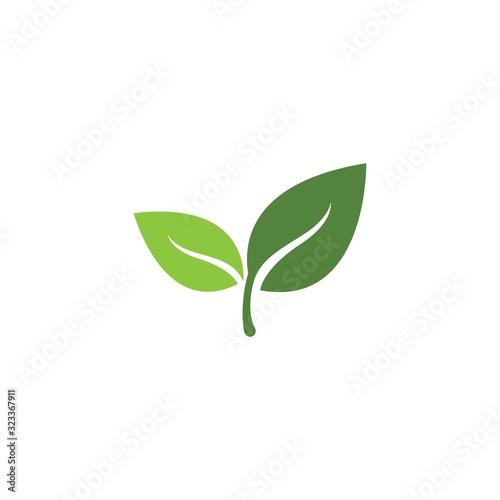 Fototapeta Green leaf logo template Vector icon obraz na płótnie