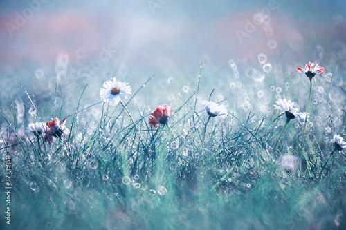 Photo Wild flower. Little flowers on a green meadow.
