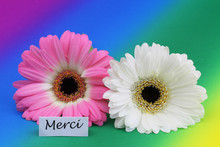 Merci (which Means Thank You I...