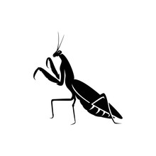 Mantis Bug