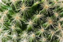 Little Cactus Macro Close Up
