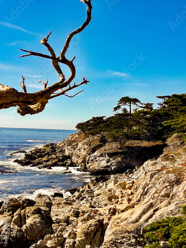 Fototapety, obrazy: tree on the beach