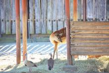 子鹿と2羽の鳥