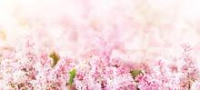 Springtime Blossoming Pink Bra...