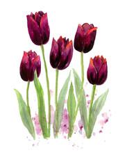 Purple Tulip Flower Element Cl...