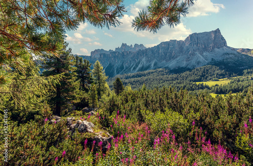 Wall mural - Beautiful summer landscape in Dolomites Alps. Beautiful countryside landscape with mountains, trees and flowers near Ra Gusela mount. Passo Giau - Dolomites, Italy, Europe. picture of wild area