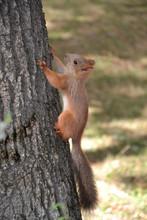 Surprised Little Fluffy Squirrel