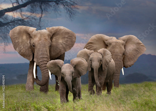 Canvastavla Afrikanische Elefant (Loxodonta africana)  mit Jungtieren von vorne, Kenia, Osta