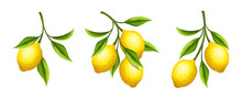 Vector Set Of Lemon Branches W...