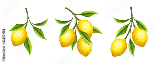 Fotografia, Obraz Vector set of lemon branches with fruit and leaves isolated on a white background