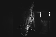 Black Horse, Black Wild Horse ...