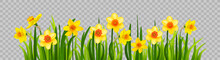 Isolated Easter Blossom Banner...