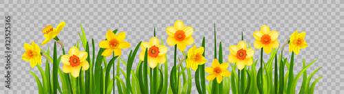 Isolated Easter blossom banner with daffodils Wallpaper Mural