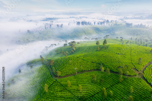 Aerial view of misty morning on the tea plantation