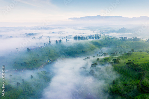 Aerial view of tea plantation with fog on morning