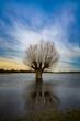 Weide - Baum auf überschwemmter Wiese mit Spiegelung im Wasser