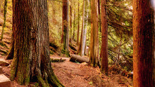Forest Trail Near Sasamat Lake...