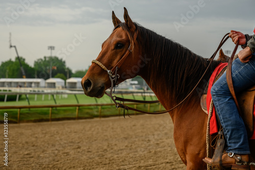 Profile of Horse over dirt track