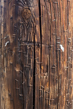Telephone Pole With Staples In...