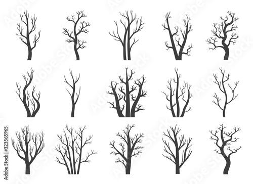 Zimowe suche drzewa