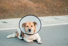 Dog Wearing Collar Neck In The Shape Of A Cone, Elizabethan Collar (also Known As A Buster Collar)
