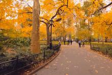 Walk In The Park. Park In New York.