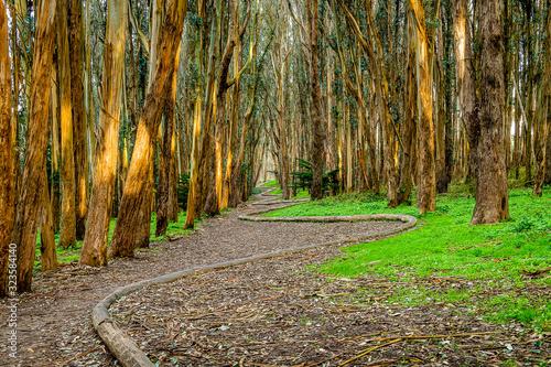Photo Hiking in the Presidio