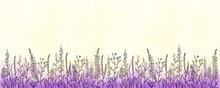 Border Of Purple Flowers Grass...