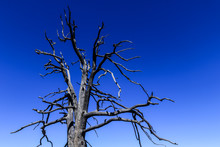 Dry Trees And Flora Of The Grand Canyon National Park, Arizona, USA