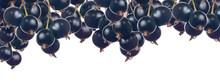 Ripe Black Currant Berries Str...