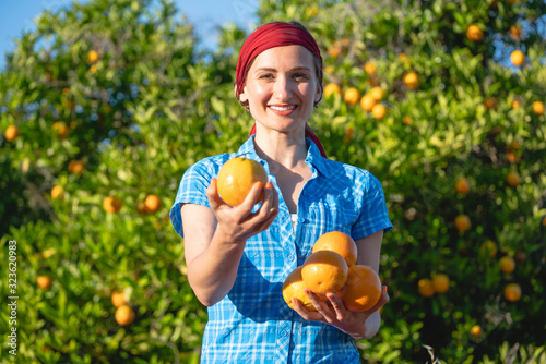 Farmer woman harvesting oranges in her orchard