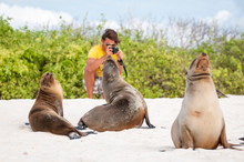 Young Tourist Taking A Photo Of Sea Lions Lounging On The Beach In The Galapagos Islands, Ecuador