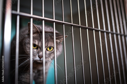 Fototapeta Sick cat waiting for treatment in cage of veterinarian clinic
