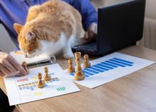 Hombre Trabajando En Oficina Con Un Gato, Finanzas, Negocios, Emprendedor.