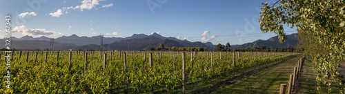 Photo Panorama Vineyard Blenheim South island New Zealand Winery grapes